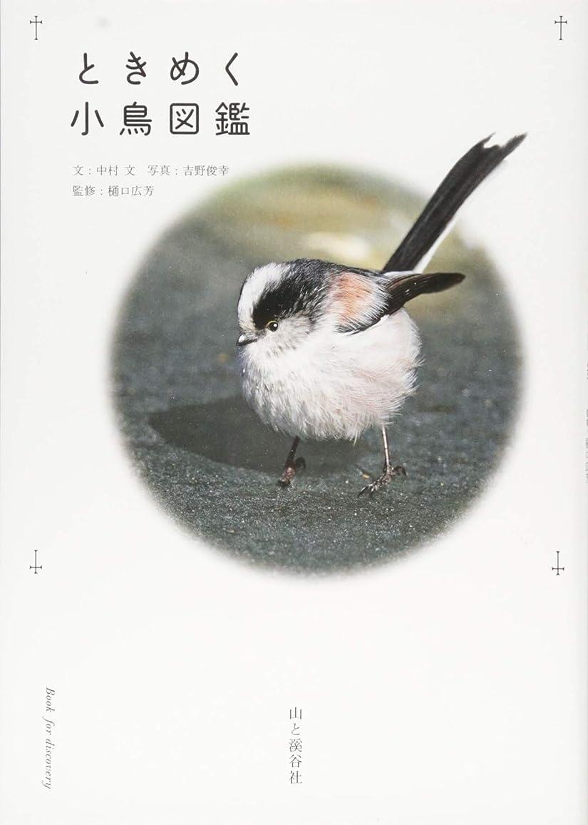 記述するオリエンテーション大量カレンダー2019 岩合光昭×ねこ (ヤマケイカレンダー2019)
