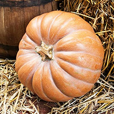Pumpkin Garden Seeds - Fairytale - Non-GMO, Heirloom Fairy Tale Pumpkins - Buckskin Orange - Vegetable Gardening Seed