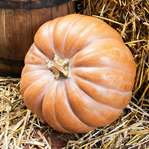(Pumpkin Garden Seeds - Fairytale - 100 Seeds - Non-GMO, Heirloom Fairy Tale Pumpkins - Buckskin Orange - Vegetable Gardening Seed )