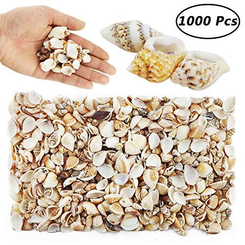 Mini Beach Natural Shells - Weoxpr 1000pcs MINI Sea Shells Mixed Ocean Beach Seashells Various Sizes Natural Seashells Starfish Fish Tank, Home Decorations, Beach Theme Party, Candle Making, Wedding Decor, DIY Crafts