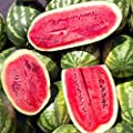 Watermelon Garden Seeds - Sugar Beauty Hybrid - Non-GMO, Vegetable Gardening Fruit Melon Seeds