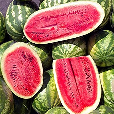 Watermelon Garden Seeds - Sugar Beauty Hybrid - Non-GMO, Vegetable Gardening Fruit Melon Seeds