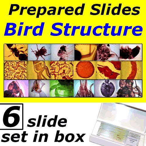 Prepared Slides: Bird Structure UKGE