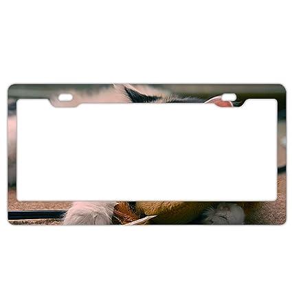 Cute Grey Koalas Auto Car License Plate Frame Tag Holder 4 Hole