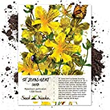 Seed Needs, St. Johns Wort Herb (Hypericum perforatum) 1,000 Seeds Non-GMO