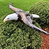 Jet Creations Inflatable American Bald Eagle
