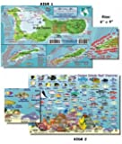 Cayman Island Fish and Creature Guide