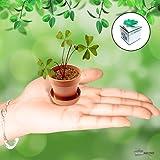 Trèfle à 4 feuilles - Cadeau Maestro