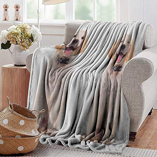 (Flannel Fleece Blanket,Golden Retriever,Two Emotional Poses of a Young Panting Domestic Puppy Happy and Playful, Multicolor,Throw Lightweight Cozy Plush Microfiber Solid Blanket 70