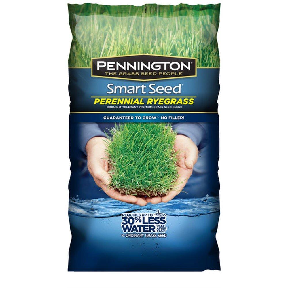Pennington 100526658 Smart Seed, Green by Pennington