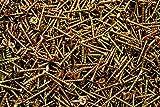 (8000) Phillips Bugle Head 6 x 1-1/4 Coarse Drywall Wood Screw - Yellow Zinc