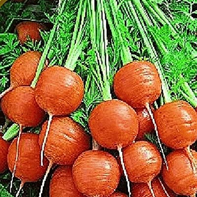 Everwilde Farms - Organic Parisian Carrot Seeds - Gold Vault Seed Packet