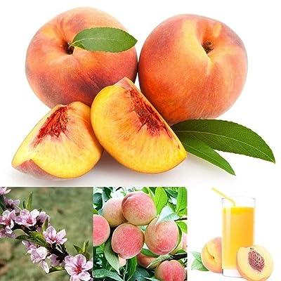 10Pcs Organic Peach Seeds Juicy Delicious Fruit Tree Garden Yard Bonsai Plant - Peach Seeds : Garden & Outdoor