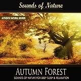 Autumn Forest (Nature Sounds)