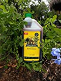 buy Nature's Super Grow for Plants 32 Oz Concentrate Amazing Plant Growth, Equals to 100 Gallons! Proven to Work Wonders on All Plants, Trees and Shrubs, Flowers, Roses, Fruits now, new 2018-2017 bestseller, review and Photo, best price $14.97