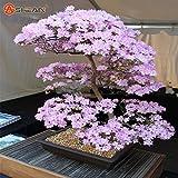 Hot Sale! Japanese Sakura Seeds Bonsai Flower Cherry Blossoms Cherry Tree Ornamental Plant 10 Particles / lot