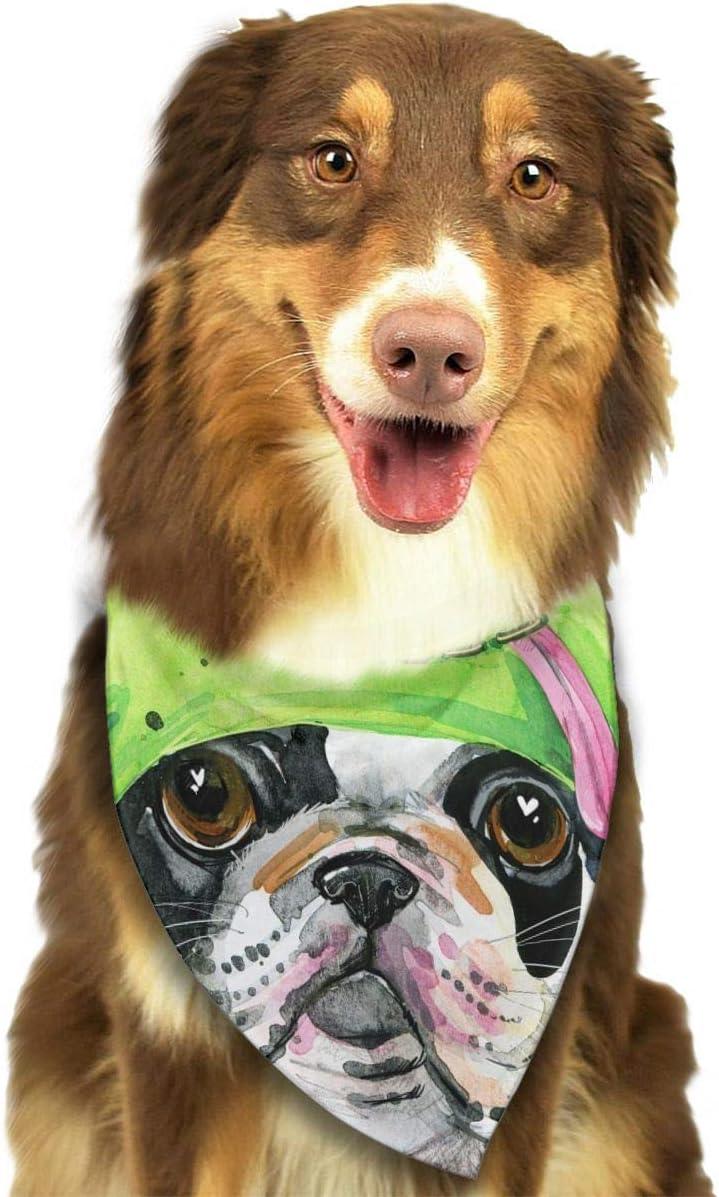 Disfraz de Rana Verde para Perro o Gato, Ideal para Perros ...