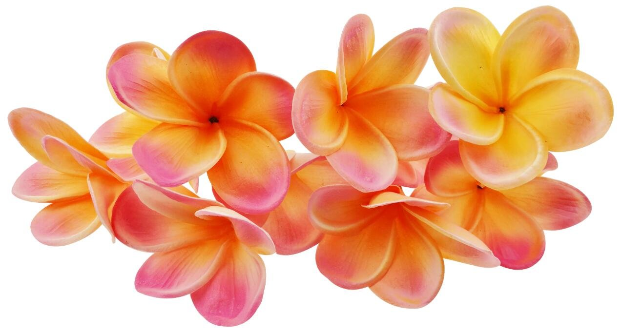 Buy Bunch Of 10 Pu Real Touch Lifelike Artificial Plumeria