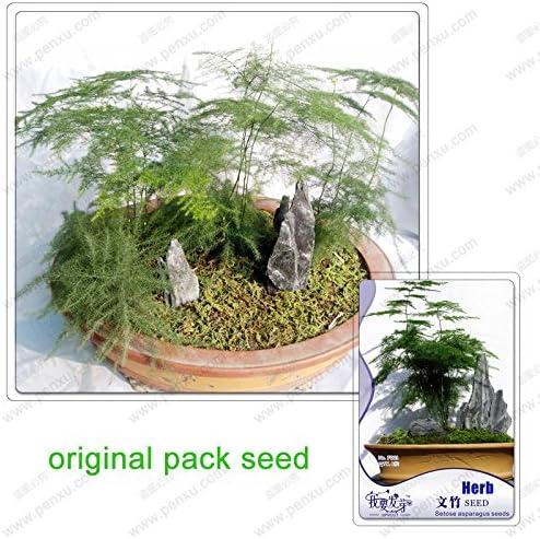 8 semillas / pack, semillas de helecho espárrago, Asparagus setaceus bonsaiTree, árboles en maceta del balcón, semillas de plantas: Amazon.es: Jardín