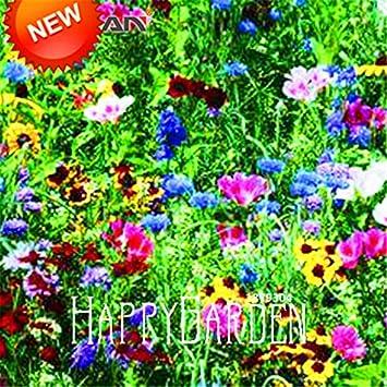 best-seller! 200 pc / lotto di combinazione semi perenne fiore ... - Un Piccolo Giardino Fragrante