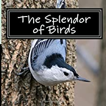 The Splendor of Birds: A Picture Book for Seniors, Adults with Alzheimer's and Others (Picture Books for Seniors, Alzheimer's Patients, Adults with ... and Others; A 'No Text' Book) (Volume 5)