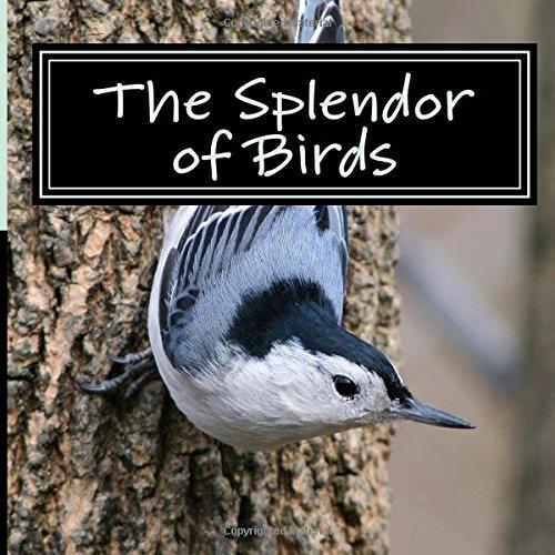Splendor Birds Picture Alzheimers Patients product image