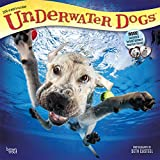 Underwater Dogs 2018 12 x 12 Inch Monthly Square Wall Calendar, Pet Humor Puppy