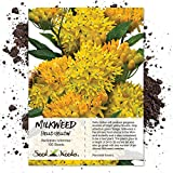 Seed Needs, Hello Yellow Milkweed (Asclepias tuberosa) 100 Seeds