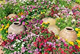 Easy Gardening Roll Out Flowers Wildflower Ground Cover Garden kit - CGC3000-3 Pack - 10-Foot 10-inch Garden Innovations