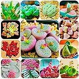 300/bag Mix Succulent Seeds Lithops Pseudotruncatella Bonsai Plants Seeds For Home & Garden Flower Pots Planters Sementes
