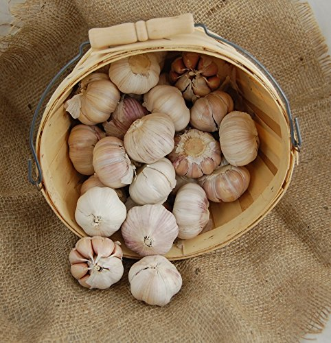 1 +Pound Fresh Spanish Roja Garlic Hard-neck Bulbs