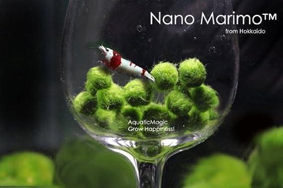 Bola de musgo Marimo para acuario, cladophora, de 3 a 5 cm: Amazon.es: Productos para mascotas
