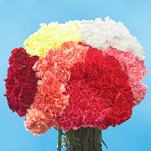 Amazon.com : GlobalRose 100 Color Carnations - Fresh Flowers For ...