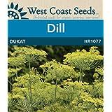 Dill Seeds - Dukat