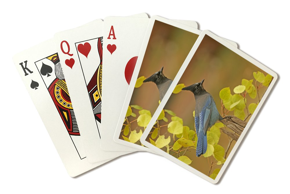 Stellar Blue Jay (Playing Card Deck - 52 Card Poker Size with Jokers)