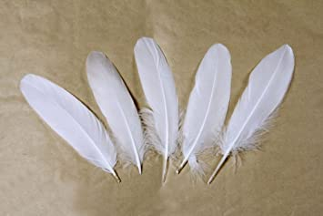 20 Hawk Feathers  6 to 8 inch long