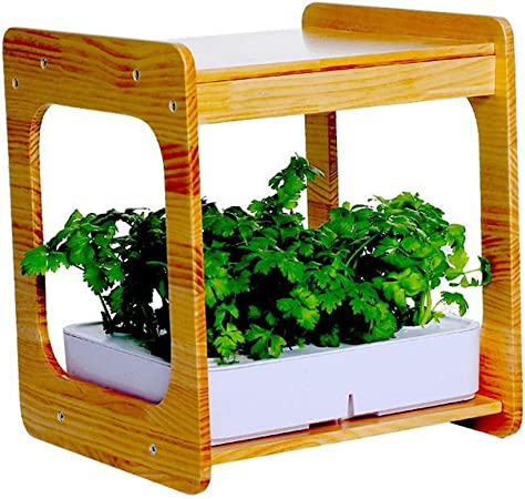 Mr. Fragile Luz de Planta LED, Jardín hidropónico Huerto Sistema para Plantas Invernadero en casa,Nature Bamboo Frame, Mini Indoor Herb Garden, Kit de Cultivo de hidroponía, Plantación sin Suelo: Amazon.es: Hogar