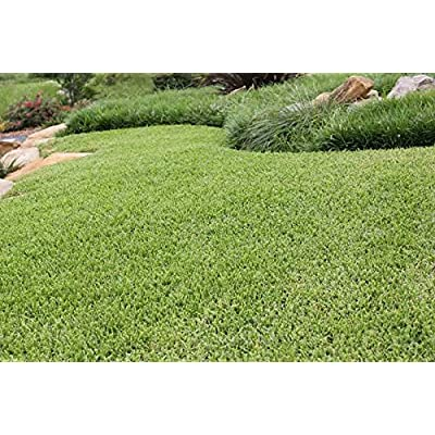Nature's Seed Buffalograss Seed Blend, 1500 sq. ft. : Garden & Outdoor
