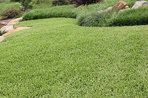 Nature's Seed Buffalograss Seed Blend, 1000 sq. ft.