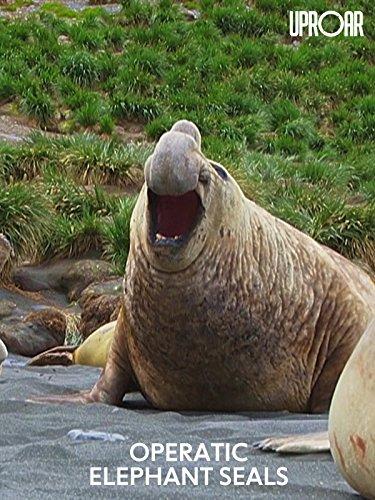 elephant seals - 5