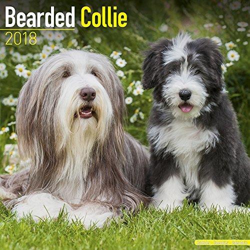 Bearded Collie Calendar 2018 - Dog Breed Calendar - Premium Wall Calendar (Bearded Collie Breed)