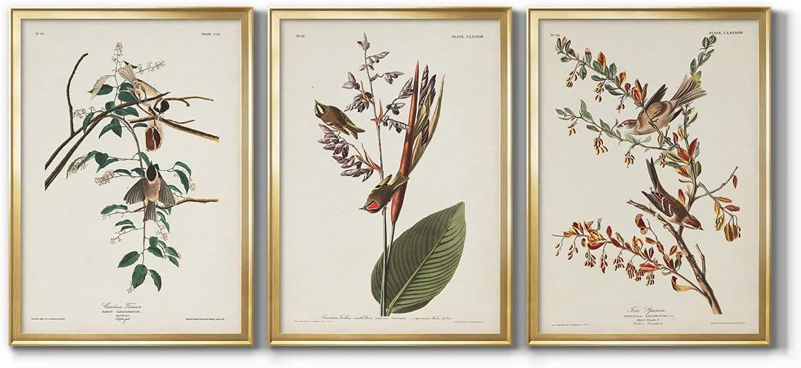 Wall Art, Home Décor, Rustic, Contemporary, Art Deco, Italian, Pl. 160 Carolina Titmouse Gold Framed Canvas, 3 Piece Set, 22X30