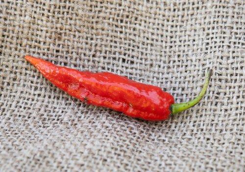 Ghost Pepper Bhut Jolokia Heirloom Pepper Premium Seed Packet + More