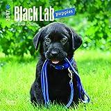 Labrador Retriever Puppies, Black 2017 Mini 7x7 (Multilingual Edition)