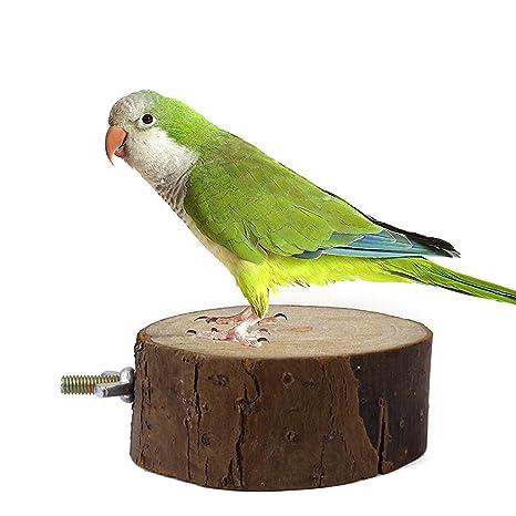 maltonyo17 loro ardilla jaula de pájaros juguete Animal de madera ...