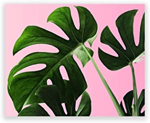 Humble Chic Wall Art Prints - Unframed HD Printed Plants Picture Poster Decorations for Home Decor Living Dining Bedroom Bathroom College Dorm Room - Monstera Palm Plant Leaf, 8x10 Horizontal