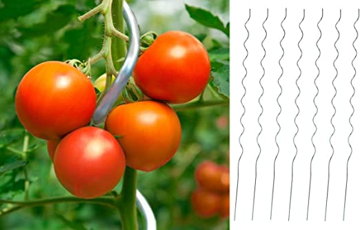 50 x Tomates espiral – Varilla aluminio 1, 8 m – Varilla pérgola Maceta (Rank para tomates (Tomate: Amazon.es: Jardín