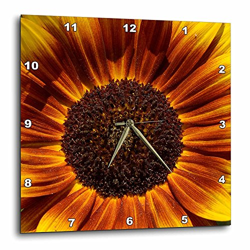 - 3dRose dpp_30838_3 Colorful Summer Sunflower Flowers Flower Photography-Wall Clock, 15 by 15-Inch