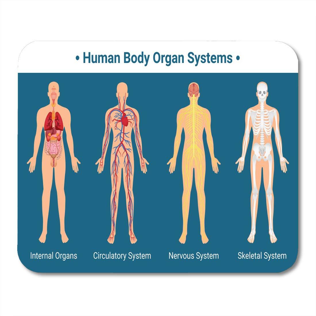 Amazon Emvency Mouse Pads Human Body Internal Organs
