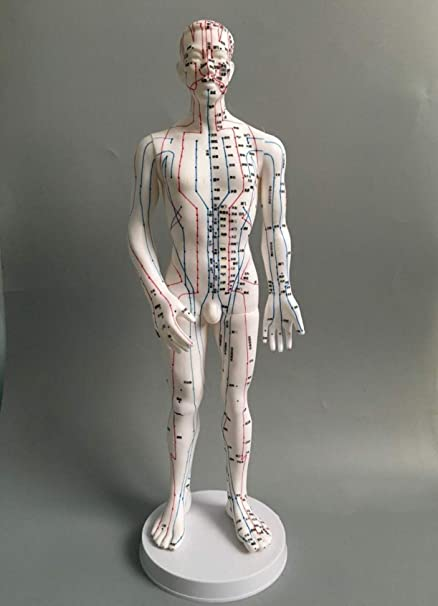 WellieSTR 1 Piece Female Acupuncture Model Female Model Human Body Acupuncture Model Female Meridians Model 20inch Brown Color